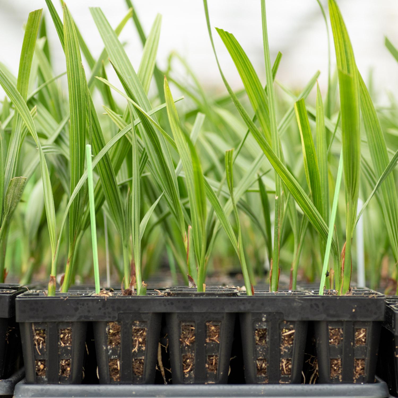 Lab | Phoenix Agrotech - Date Palm Tissue Culture Lab