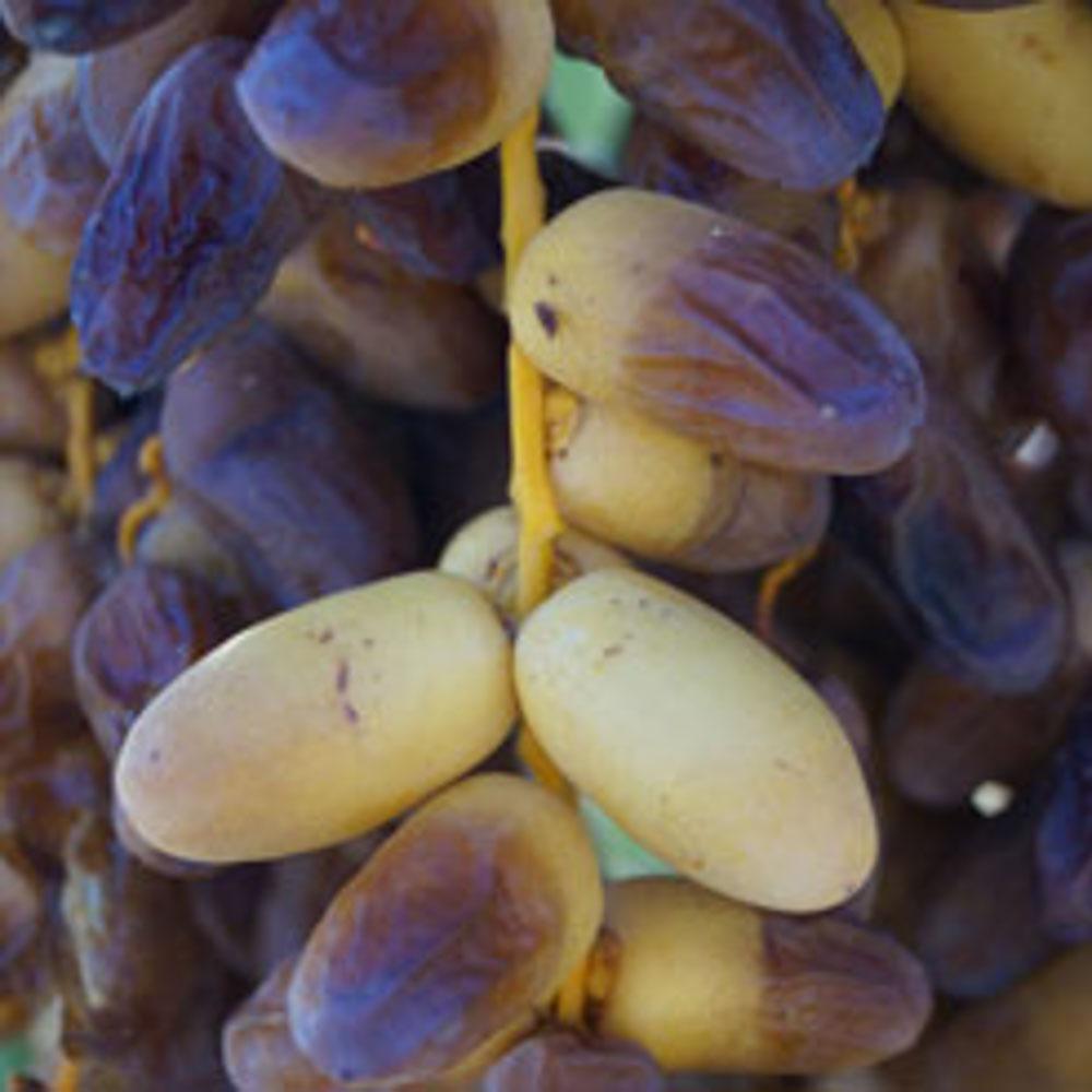 phoenix-agrotech-halawy-date-fruit.jpg