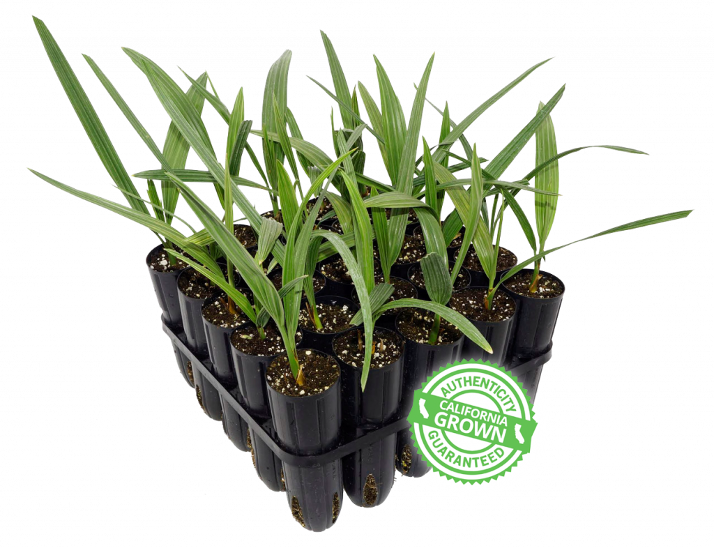 Home   Phoenix Agrotech - Date Palm Tissue Culture Lab