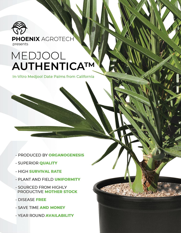 Medjool Authentica Design